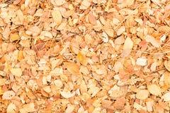 Asciughi le foglie struttura e fondo Immagine Stock