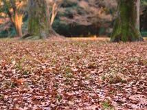 Asciughi le foglie su erba con gli alberi nel fondo Fotografia Stock Libera da Diritti