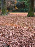 Asciughi le foglie su erba con gli alberi nel fondo Immagini Stock