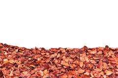 Asciughi le foglie su fondo bianco Mucchio delle foglie di caduta su fondo bianco Fotografia Stock Libera da Diritti