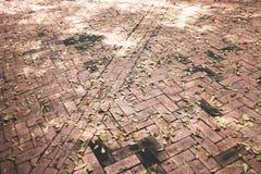 Asciughi le foglie su luminoso del pavimento Tiled fotografie stock