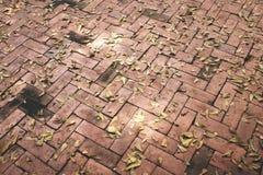 Asciughi le foglie su luminoso del pavimento Tiled immagine stock libera da diritti