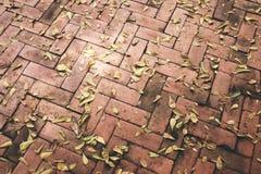 Asciughi le foglie su luminoso del pavimento Tiled fotografia stock