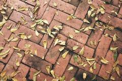 Asciughi le foglie su luminoso del pavimento Tiled immagini stock libere da diritti