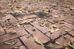 Asciughi le foglie su luminoso del pavimento Tiled fotografia stock libera da diritti