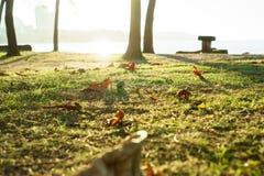 Asciughi le foglie sul campo al parco Fotografia Stock Libera da Diritti