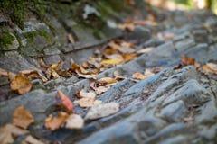 Asciughi le foglie sul percorso di pietra in Great Smoky Mountains Immagine Stock Libera da Diritti