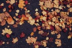 Asciughi le foglie sulla strada Immagine Stock