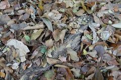 Asciughi le foglie sulle radici dell'albero per gli ambiti di provenienza fotografie stock