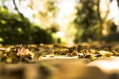 Asciughi le foglie in un parco nell'estate di San Martino Fotografia Stock