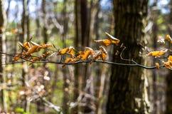 Asciughi le foglie in una foresta Immagine Stock Libera da Diritti