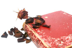 Asciughi rosa Fotografia Stock