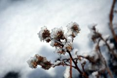 Asciutto e freddo Fotografia Stock