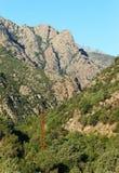 Asco góry w Corsica zdjęcia stock