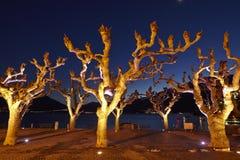 Ascona (Zwitserland) - Verlichte bomen Royalty-vrije Stock Afbeeldingen