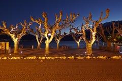 Ascona (Zwitserland) - Verlichte bomen Royalty-vrije Stock Afbeelding