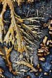 Ascorbic kwas i potasu ałun Zdjęcia Stock