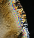 Ascorbinezuur dichte omhooggaand stock afbeelding