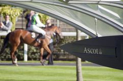 Ascot race event. A sign pointing to ascot race event with a horse in the background. Great for horse racing event news publications stock images