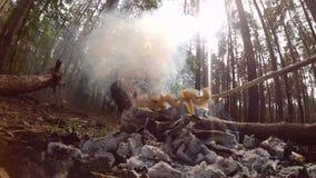 Ase a la parilla los pinchos del tocino de la manteca de cerdo en el bosque de debajo el primer almacen de metraje de vídeo