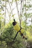 Asean boy nodes the rope and smiling happily in camp adventure Background blurry tree stock photos