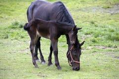 Asegure el caballo y a la mama del bebé Imagen de archivo