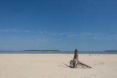Aserrador en la playa Fotos de archivo