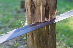 Aserrar un árbol con el handsaw Imagen de archivo