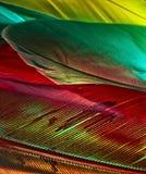 Asesinato de colores III Foto de archivo libre de regalías