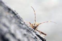 Asesino Bug Imagen de archivo libre de regalías
