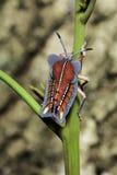 Asesino Bug Fotos de archivo libres de regalías