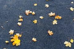 Asfalt gele bladeren Stock Afbeeldingen
