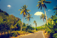 Asfalt road with palm trees Stock Photo