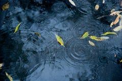asfalt tappar nytt regnvatten Arkivbild