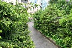 Asfaltbana i stadsborggården som omges av unga granar arkivbilder