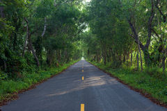 Asfaltbygdväg arkivfoto
