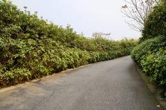 Asfalterad väg i träd och buskar på solig vårdag Arkivfoton