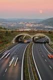 Asfalthuvudväg med ecoduct på solnedgången Royaltyfria Bilder