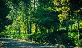 Asfalto del camino lateral con la pared verde del árbol y del arbusto en lado en el puncak Bogor fotografía de archivo libre de regalías