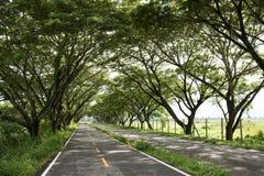 Asfalto dopo pioggia in pozze Strada, tunnel degli alberi Fogliame, s fotografie stock libere da diritti