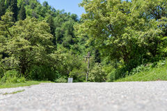 Asfalto fra gli alberi Fotografia Stock Libera da Diritti