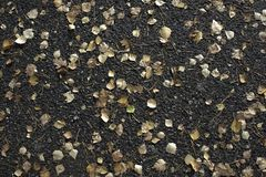 Asfalto molhado com folhas acastanhadas Queda, outono Fotos de Stock