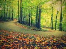 Asfaltowa ścieżka prowadzi wśród bukowych drzew przy pobliskim jesień lasem otaczającym mgłą dzień deszcz Obraz Royalty Free