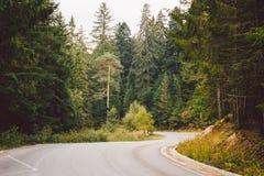 Asfaltowa droga w górach wśród sosnowych lasów Obraz Stock