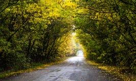 Asfaltowa droga w kolorowej jesieni deciduous lesie Obraz Stock