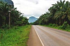 Asfaltväg ändå den tropiska djungeln, rainforest, Krabi Arkivfoto