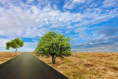 Asfaltväg bland fält under fantastisk himmel arkivbild