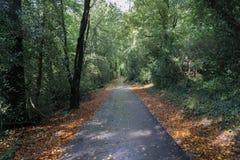 Asfaltväg efter regnet i den gröna skogen royaltyfria foton