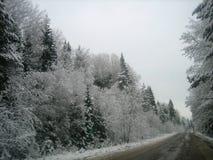 Asfaltväg i den djupa skogen på en våt vinterdag royaltyfri fotografi
