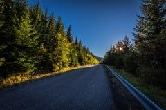 Asfaltväg i den gröna barrskogen vid solnedgången från Dolni till Horni nadrz i Jeseniky arkivfoton